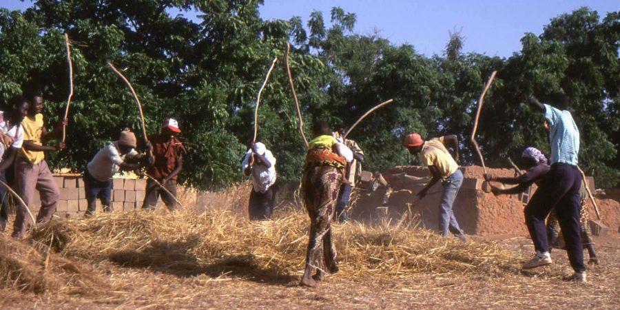 Battage collectif du riz / Sokoura